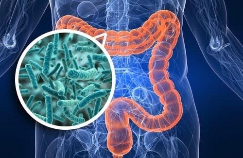 Probiotic Implant